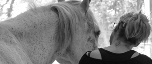 mediation cheval coach finistere