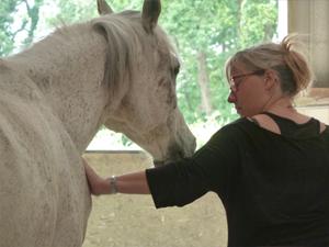 formations seminaires seances ateliers avec le cheval pour mediateur particuliers et entreprises